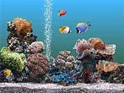 Aquarium skjermsparer