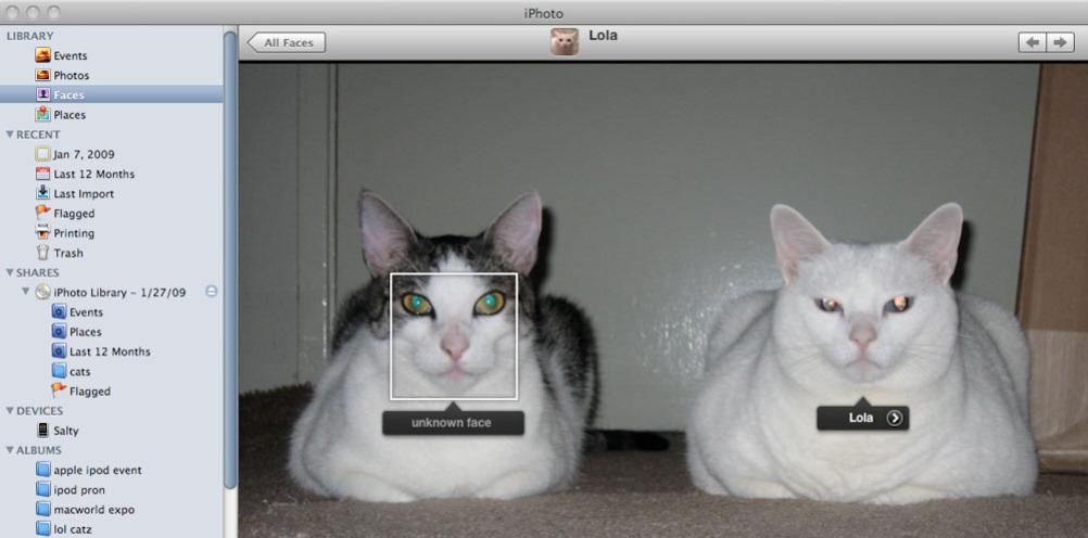 På et bilde av to katter klarte iPhotos Faces å skille Lola fra den andre katten.