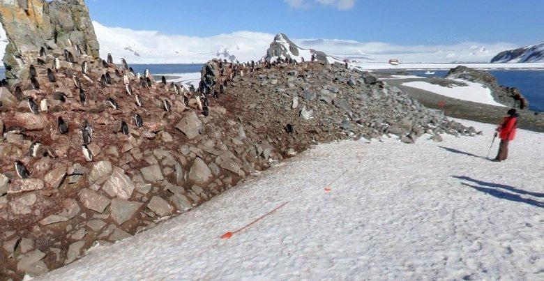 street view antarktis