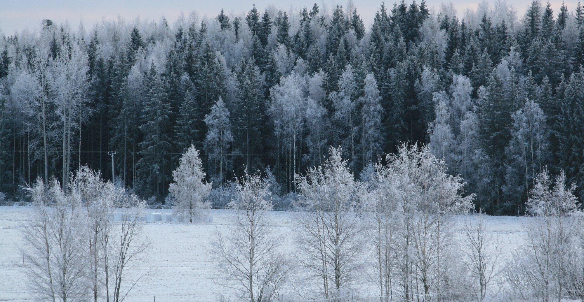 I skrivende stund er det minus 30 i Rovaniemi, Finland. Det er mer enn iPhone 4S tåler.