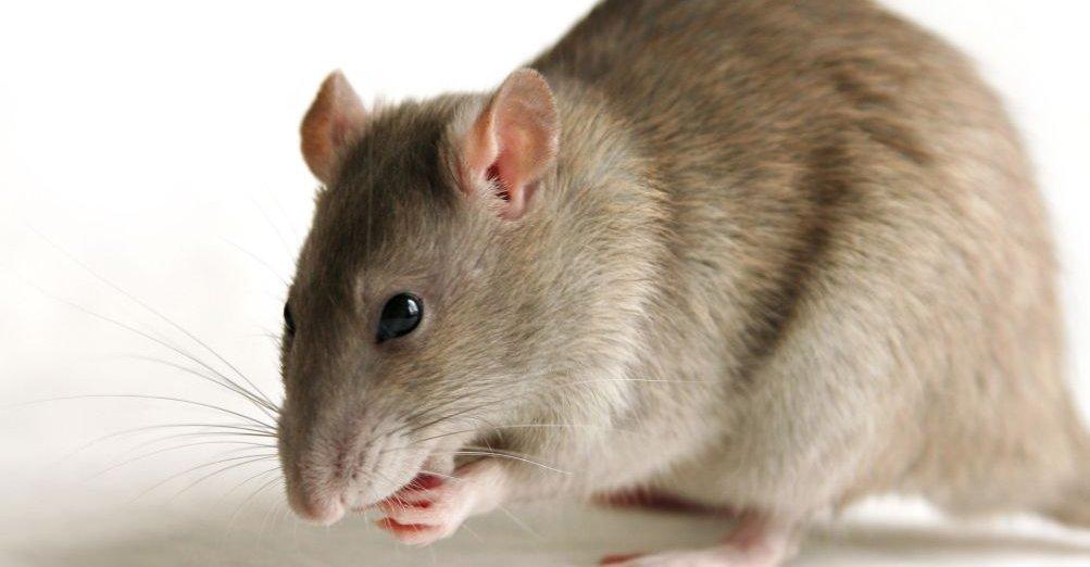 Dette dyret er langt smartere enn Google, hevder forskere.